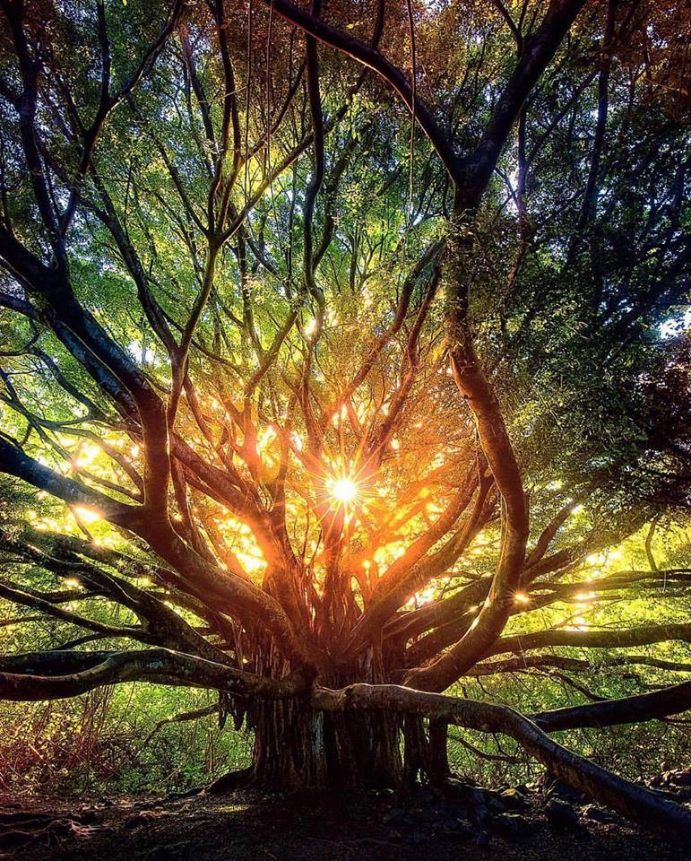 The heart of the forest in Maui, Hawaii