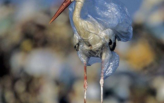 Stories of Storks
