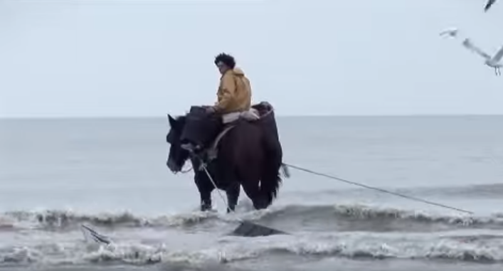 Shrimp fishing on horseback in Oostduinkerke