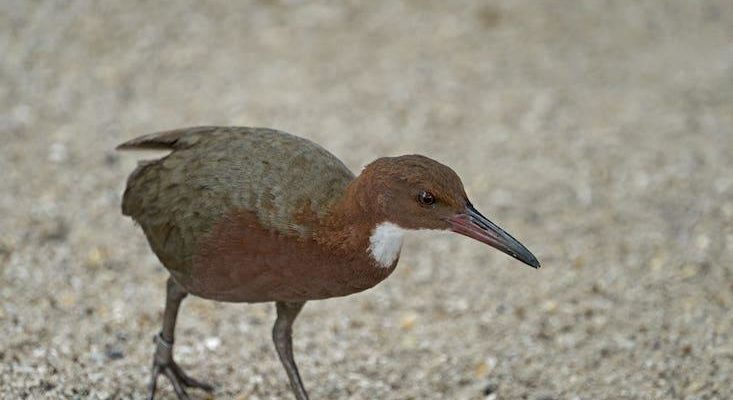 "What an Extinct Bird Re-Evolving Says About ""Species"""